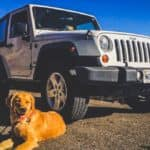 Pets On Road Trips