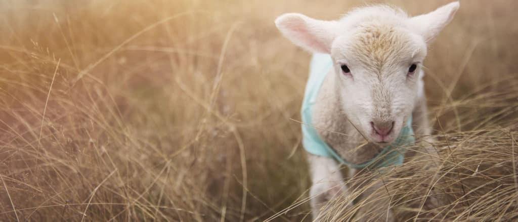 San Diego Children's Museum lamb