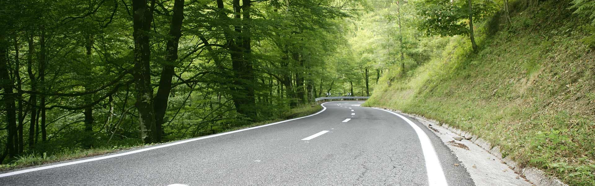 Forest Road Background
