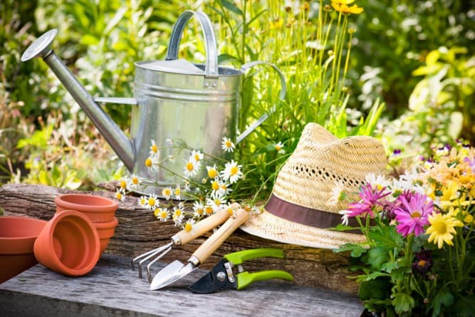 Bon Get Your Green Thumb With These Simple Gardening Tips