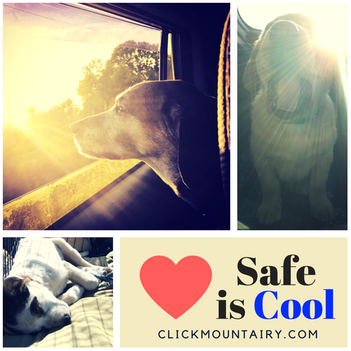 Pet Safety by Mount Airy CDJRF