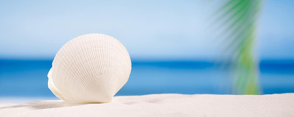 white shell on white sand beach in florida